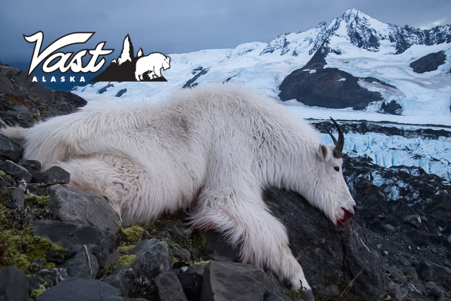 Chugach Range Mountain Goat Hunt