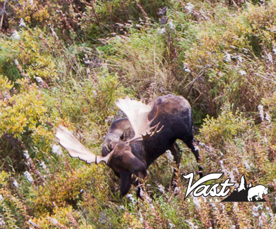 Moose Hunting Photos