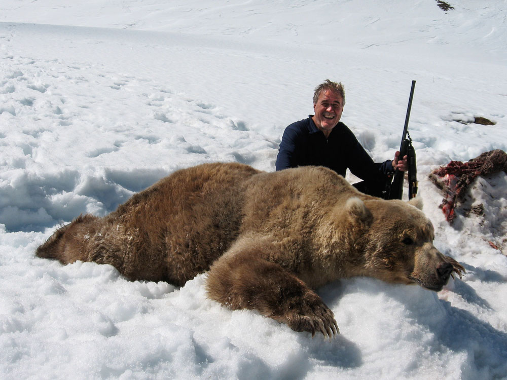 Brown Bear kills Caribou