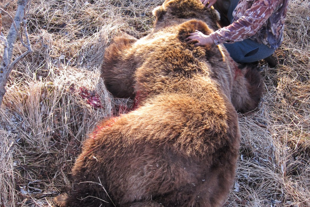 Alaska Hunting Trips