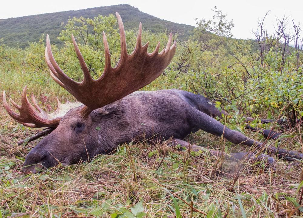 Alaska Moose Outfitters