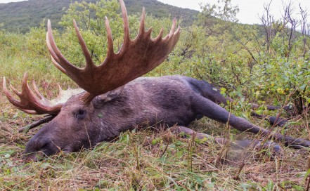 Alaska Moose Outfitters