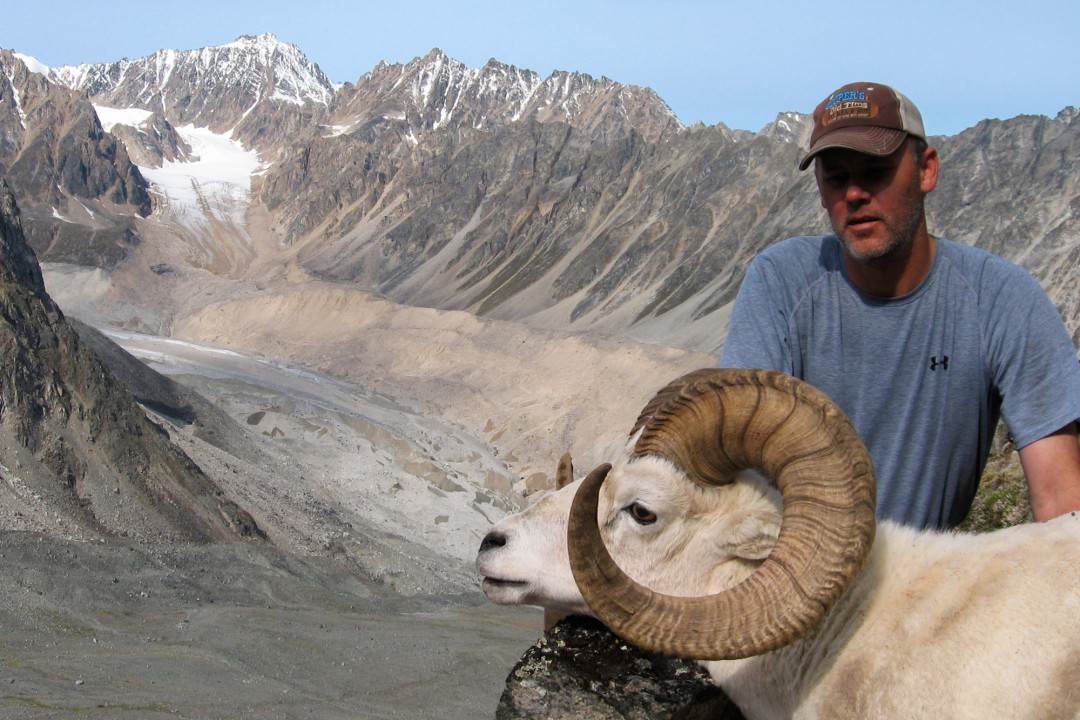 Chugach Dall Sheep