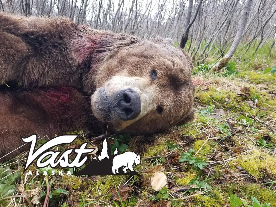 Brown Bear Hunting In Alaska