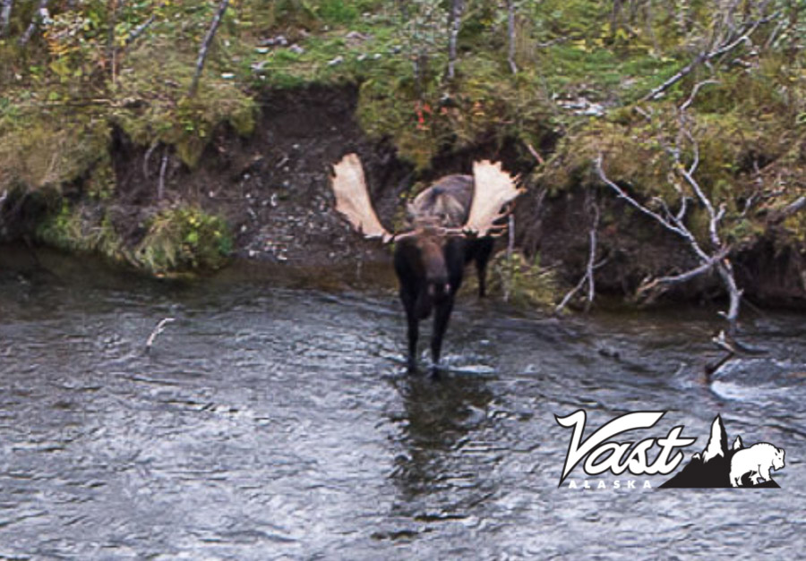Alaska Peninsula Moose Hunt