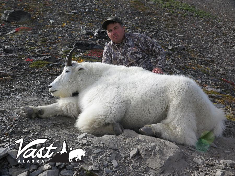 Mountain Goat Hunting In Alaska